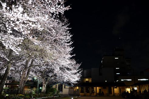自由学園明日館の夜桜