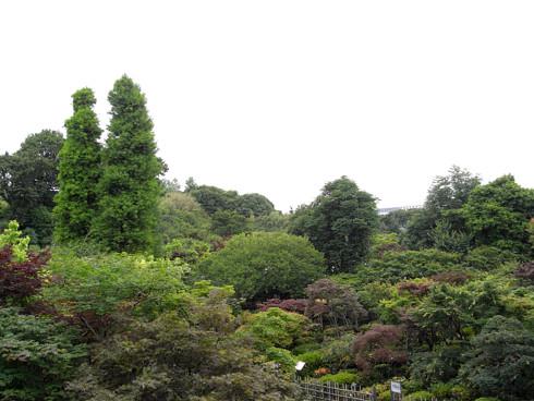 植木屋さんの樹木