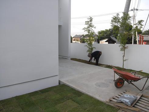 芝生 張りの施工状況