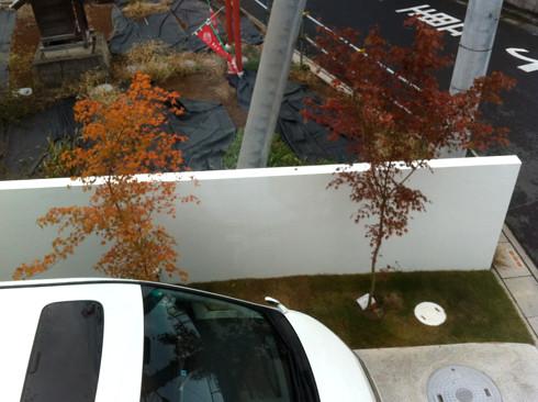 玄関アプローチの紅葉したイロハモミジ