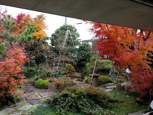 ヤマモミジが紅葉した庭