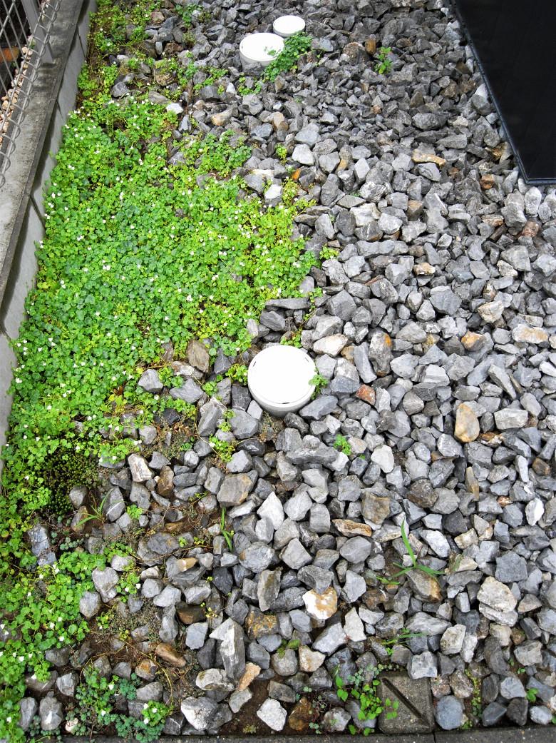 外構の砂利敷きと可愛い地被植物