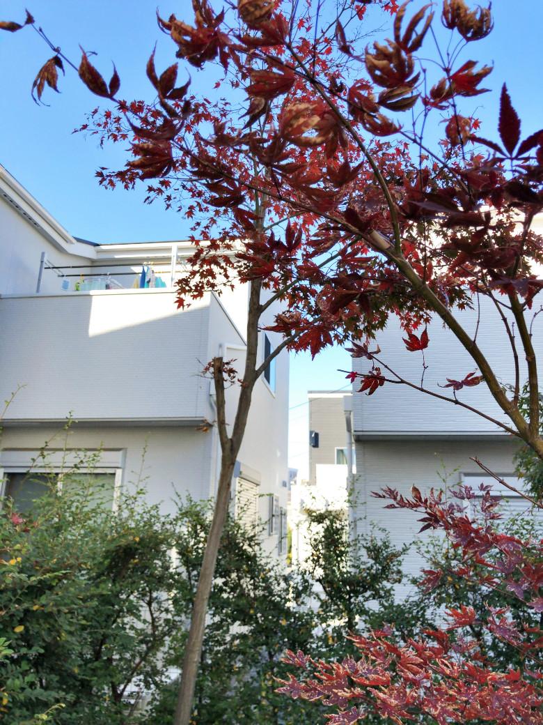 裏庭から見える建売住宅